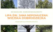 Konkurs - Europejskie Drzewo Roku
