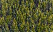 Wielkoobszarowa Inwentaryzacja Stanu Lasu w kraju w latach 2020-2024